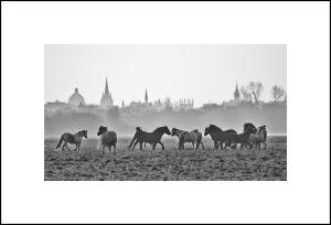 port-meadow-horses
